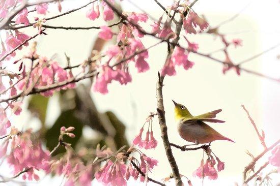 Kadoorie Farm and Botanical Gardens: Little bird