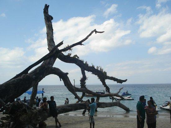 Elephant Beach : tree