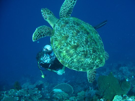 Janji Laut Resort: plongée