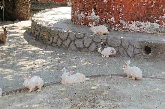 Langkawi Oriental Village: Random rabbit area!