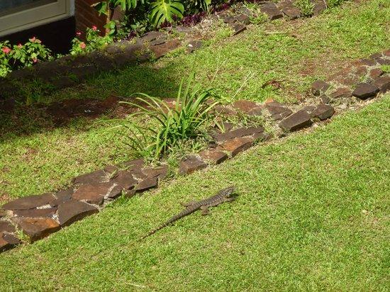Raices Esturion Hotel : Un lagarto en el jardín