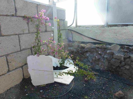 Ecovillaclub : Sturmschaden
