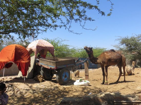 Hotel Master Paradise: camel tour close by