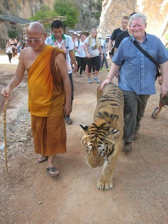 Tiger Temple ( Wat Pa luang Ta Bua): Walking with the Tigers.