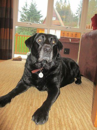 Drimsynie Estate Holiday Village : our shadsky waiting to go out for our daily walk