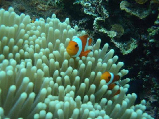 Pemuteran, Indonezja: Nemo