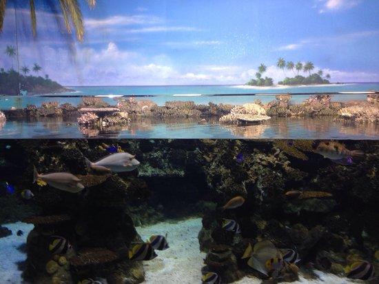 L'Aquarium de Barcelona: Bellissima vasca!