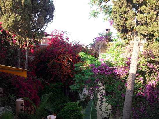 Riad Malika : riad en fleur 7