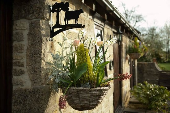 The Beeches Farmhouse B&B & Pig Wig Cottages: flowerpot beside cottage door