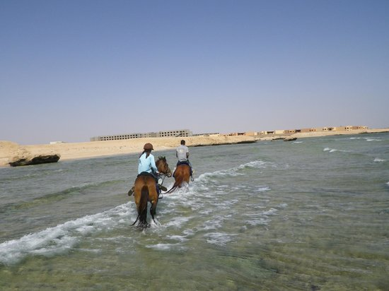 Gamila Stable Club Horse and Camel Riding: riding into the sea with Asila