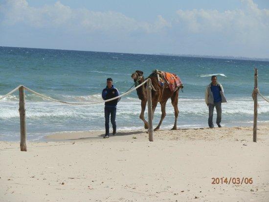 Moevenpick Resort & Marine Spa Sousse : private beach