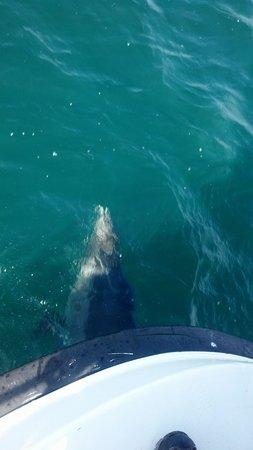 Galway Bay Fishing: lone dolphin near Aran Islands