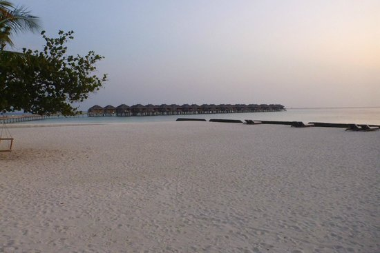 Constance Moofushi: Early in the Morning