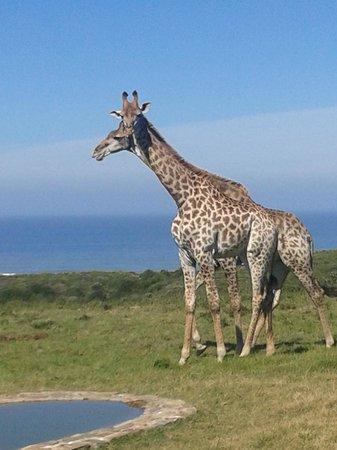 Oceana Beach and Wildlife Reserve: Wildlife