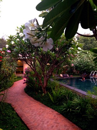 Blue Bird Hotel : Pool area