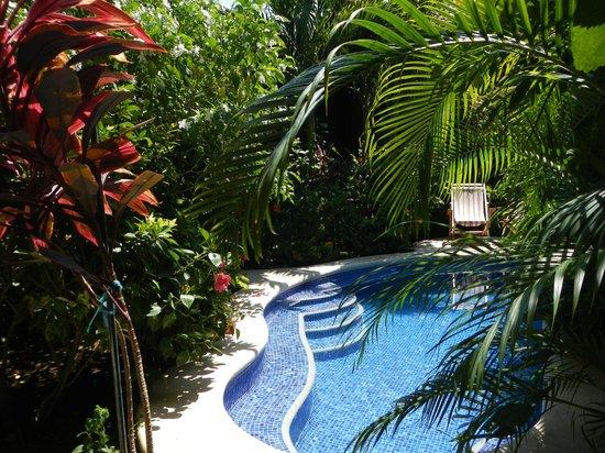 Casa Cubana: pool
