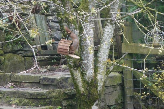 Craik Na Dav B & B: A red squirrel in the B&B garden