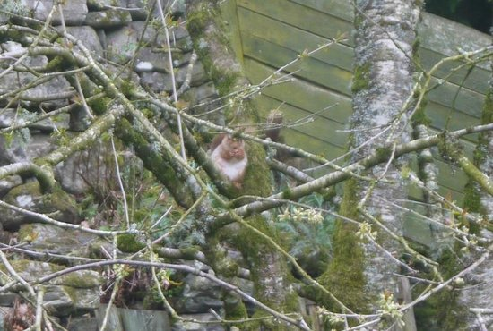 Craik Na Dav B & B : A red squirrel in the B&B garden