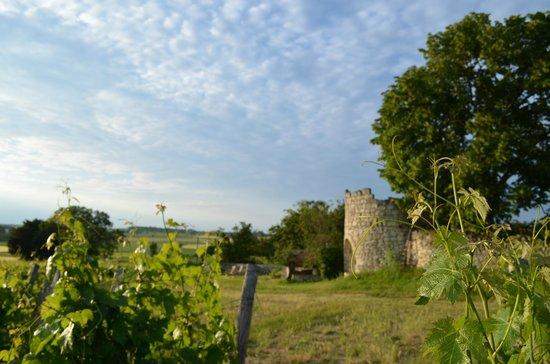 La Grande Maison d'Arthenay: Vineyard Views