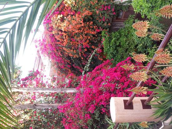 Riad Malika : riad en fleur 12