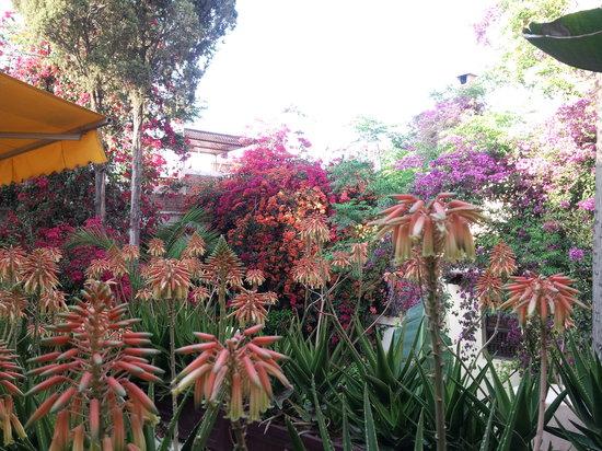 Riad Malika: riad en fleur 15