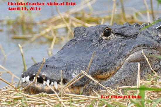 Florida Cracker Airboat Rides & Guide Service: Maybe implants would help his grin?