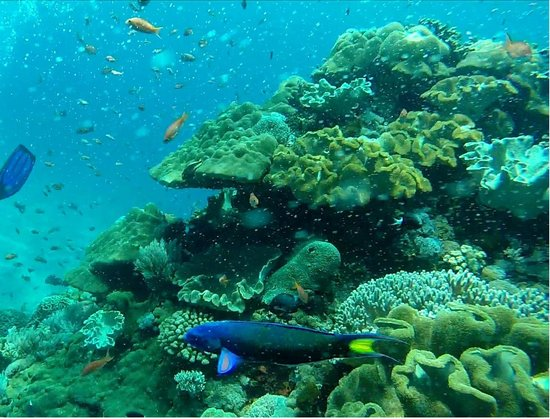 Lembongan Dive Center : Coral