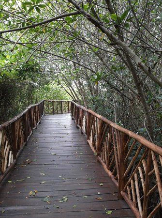 Occidental Grand Cozumel: mangroves