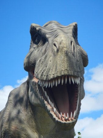 Field Station: Dinosaurs: Up close and personal