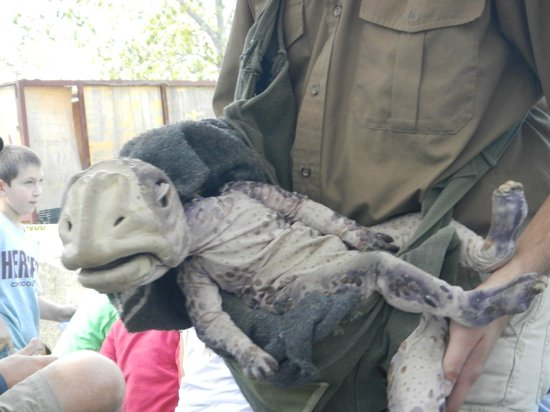 "Field Station: Dinosaurs: ""Live"" baby brought out during show"