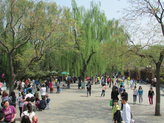 Beijing Zoo: Grounds of Zoo