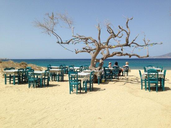 Plaza Beach Hotel: taverna