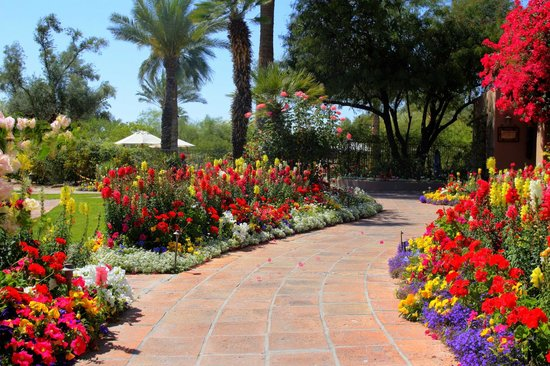 Hermosa Inn : Lots of beautiful flowers complemented by areas of cactus