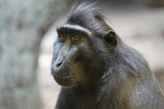 Henry Doorly Zoo: Baboon