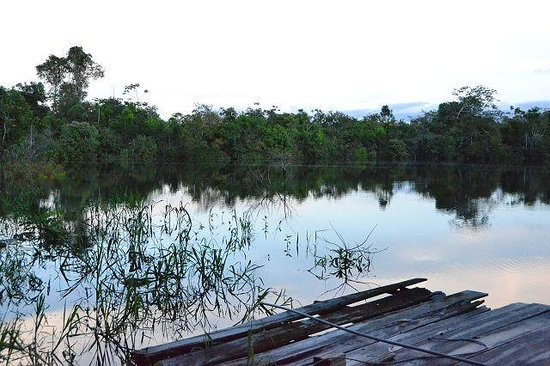 San Pedro Lodge E.I.R.L. : amazonas river right in front of he lodge with private river access