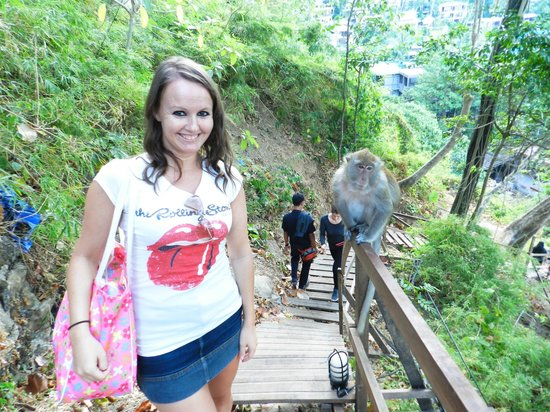 monkey trail - Picture of Centara Grand Beach Resort ...