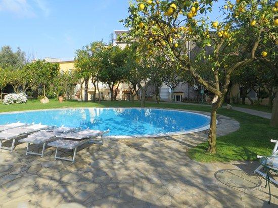 Antiche Mura Hotel: Pool surrounded by lemon/orange trees