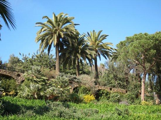Parc Güell : nature