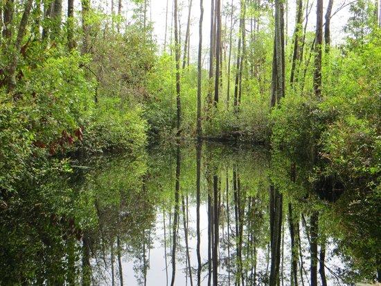 Okefenokee Swamp Park Okefenokee Swamp Park ...