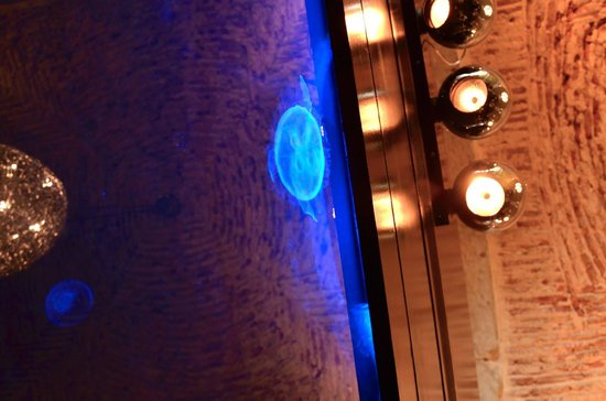 Largo: jellyfish in tank and ceiling
