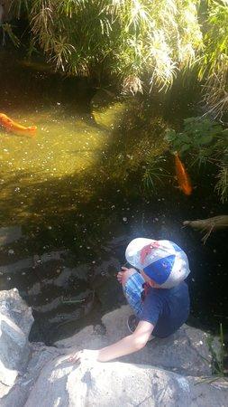 Catalonia Punta del Rey: Fish in the garden