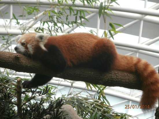 Singapore Zoo: This is Not White Panda ;-)