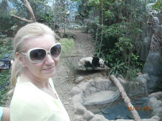 Singapore Zoo: And this is white panda as well... ( which one?). ;-)