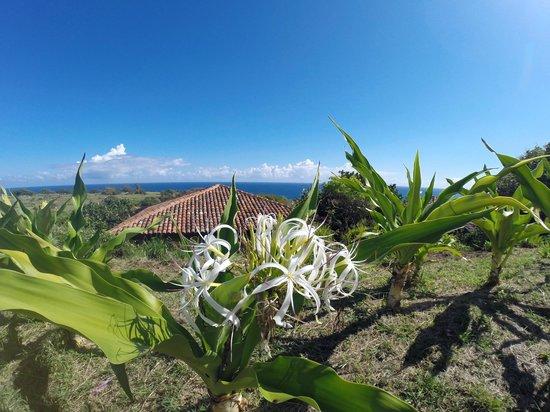 Royal Isabela: grounds are kept imaculate