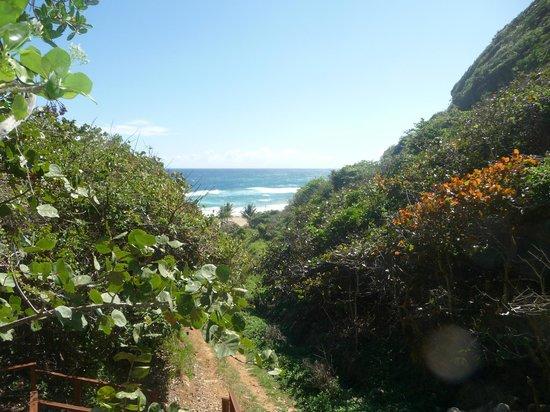 Royal Isabela : view walking down to beach