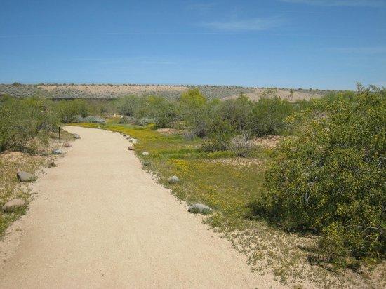 Deer Valley Petroglyph Preserve: Easy walking trail