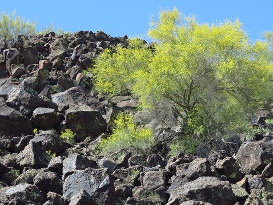 Deer Valley Petroglyph Preserve: Not just a big pile of rocks!