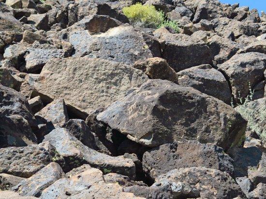Deer Valley Petroglyph Preserve: Adjust your eyes