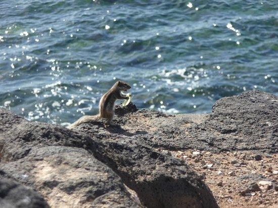 Broncemar Beach: local chipmunks