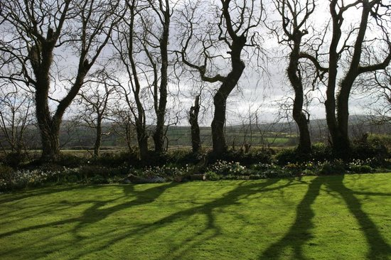 Cefn-y-Dre Country House Bed & Breakfast: wonderful garden